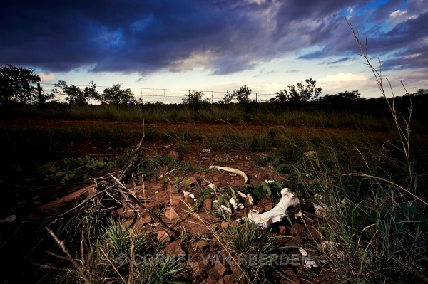 Rhino bones lie just meters away from the Mozambique border. The poachers didn't even have to walk far.