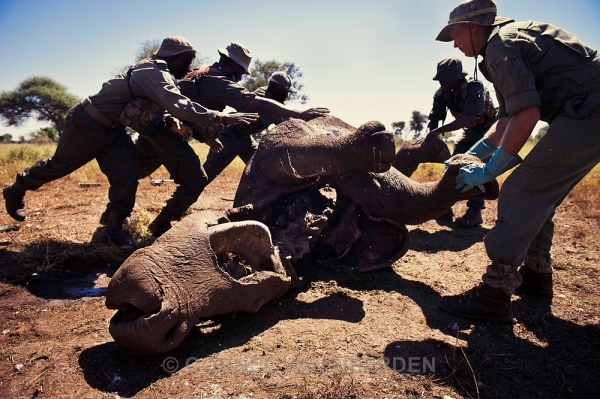 Ranger roll over a rhino that was poached a couple days earlier. They are searching for evidence and clues.