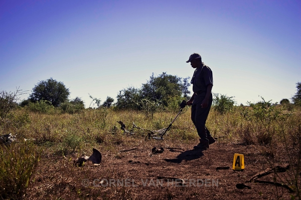 Ranger use a metal detector while searching for clues at the crime scene.